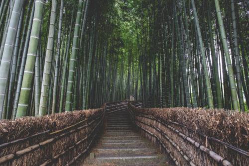 Why Study Aikido?